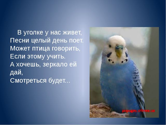 В уголке у нас живет, Песни целый день поет. Может птица говорить, Если этом...