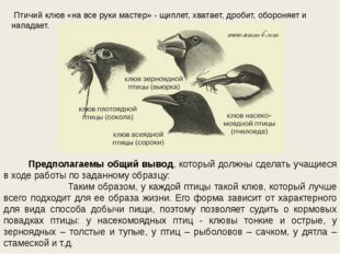 Птичий клюв «на все руки мастер» - щиплет, хватает, дробит, обороняет и напа