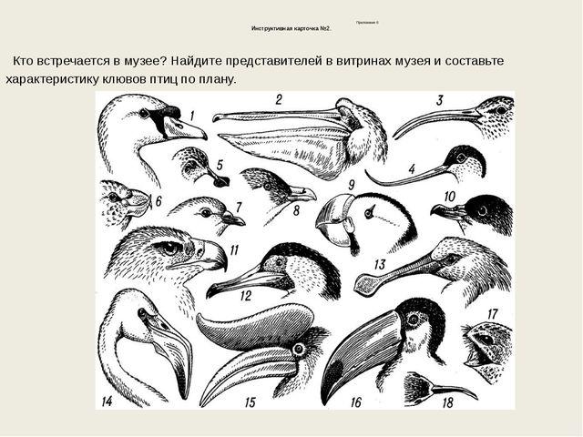 Приложение 6 Инструктивная карточка №2. Кто встречается в музее? Найдите пре...