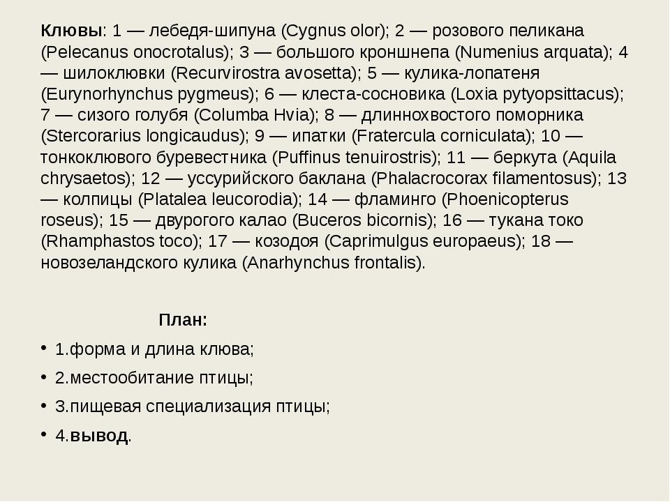 Клювы: 1 — лебедя-шипуна (Cygnus olor); 2 — розового пеликана (Pelecanus onoc...