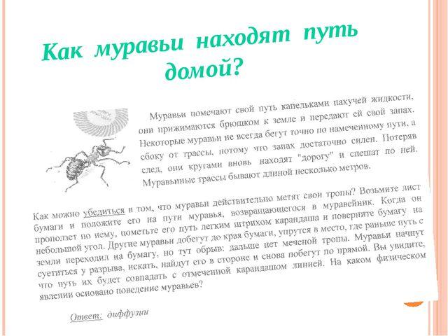 Как муравьи находят путь домой?