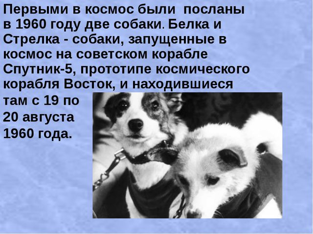 Первыми в космос были посланы в 1960 году две собаки. Белка и Стрелка - собак...