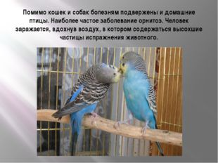 Помимо кошек и собак болезням подвержены и домашние птицы. Наиболее частое за