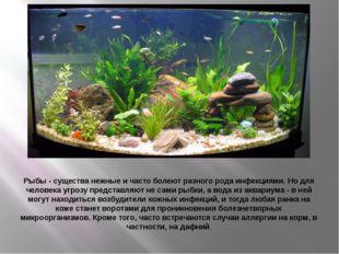 Рыбы - существа нежные и часто болеют разного рода инфекциями. Но для человек