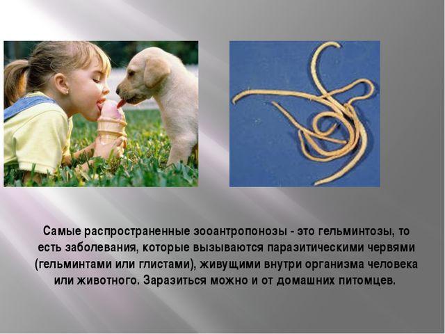 Самые распространенные зооантропонозы - это гельминтозы, то есть заболевания,...