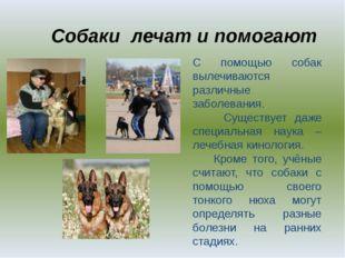 Собаки лечат и помогают . С помощью собак вылечиваются различные заболевания.