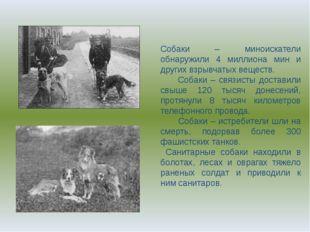 Собаки – миноискатели обнаружили 4 миллиона мин и других взрывчатых веществ.