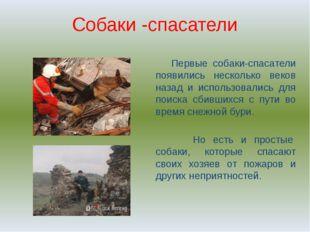 Собаки -спасатели Первые собаки-спасатели появились несколько веков назад и и