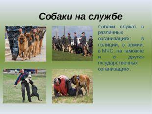 Собаки на службе Собаки служат в различных организациях: в полиции, в армии,