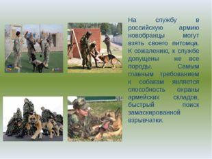 На службу в российскую армию новобранцы могут взять своего питомца. К сожален