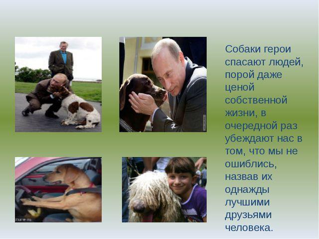 Собаки герои спасают людей, порой даже ценой собственной жизни, в очередной р...