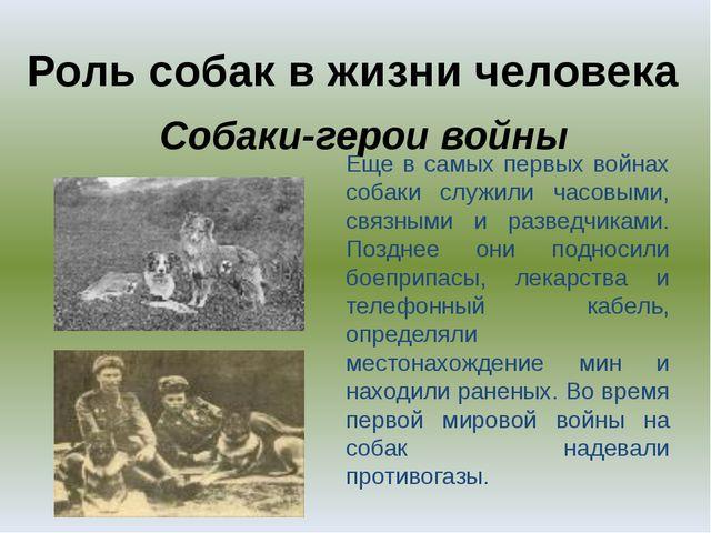 Роль собак в жизни человека Собаки-герои войны Еще в самых первых войнах соба...