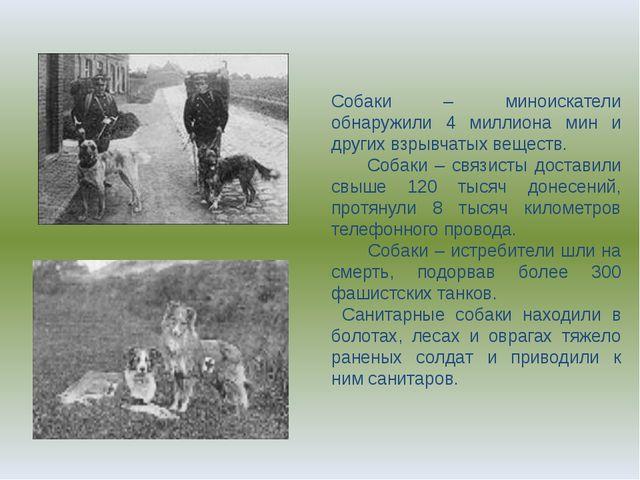 Собаки – миноискатели обнаружили 4 миллиона мин и других взрывчатых веществ....