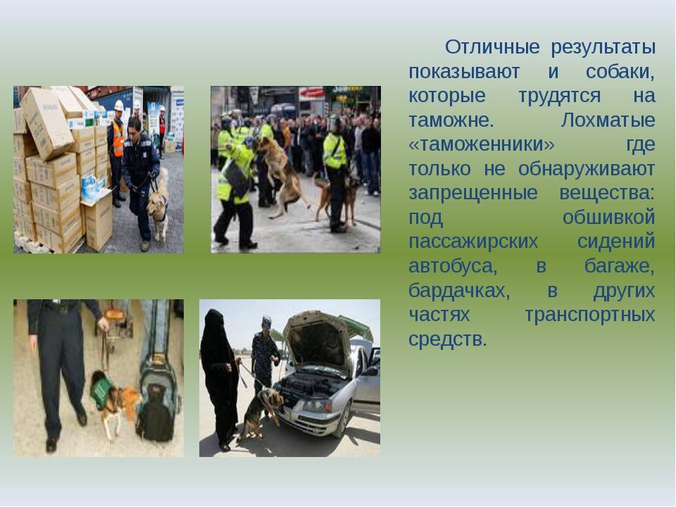Отличные результаты показывают и собаки, которые трудятся на таможне. Лохмат...