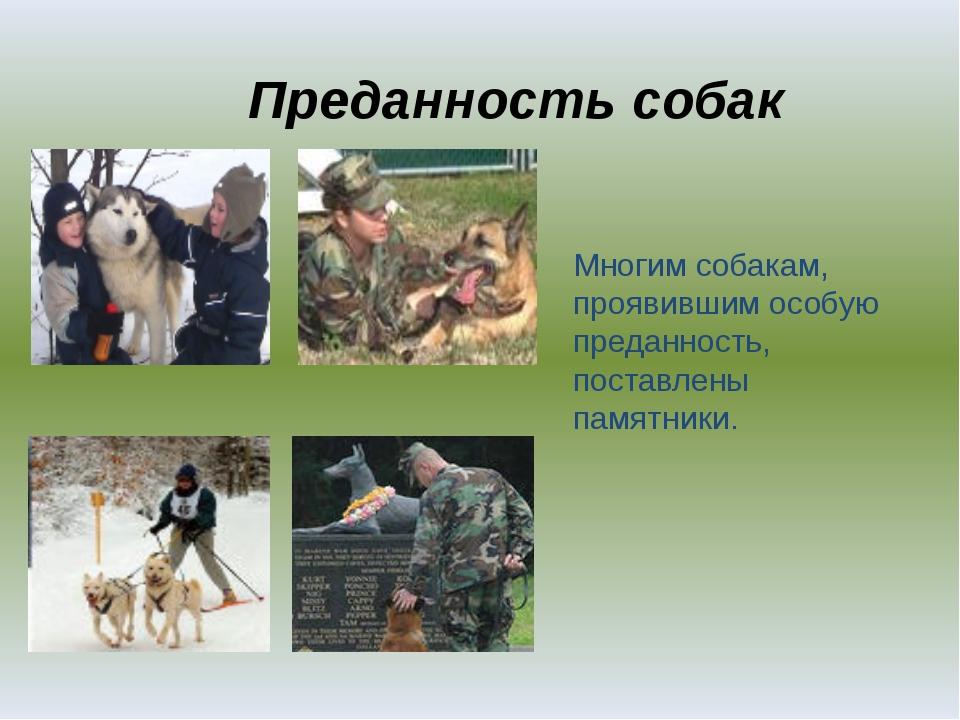 Преданность собак Многим собакам, проявившим особую преданность, поставлены п...