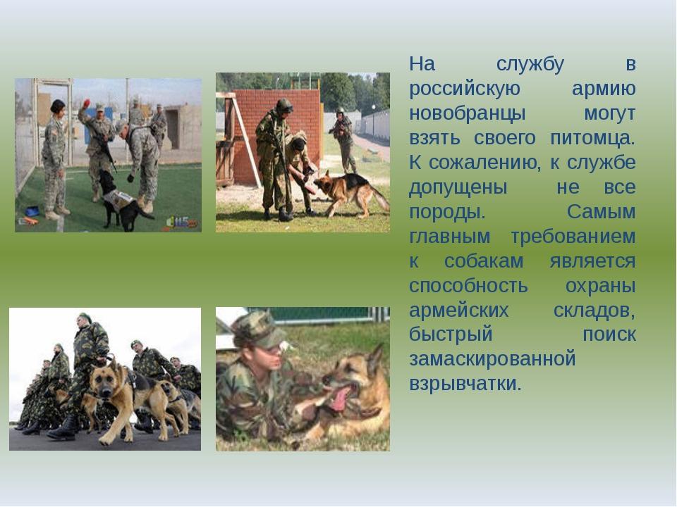 На службу в российскую армию новобранцы могут взять своего питомца. К сожален...
