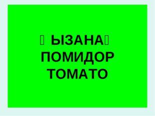 ҚЫЗАНАҚ ПОМИДОР TOMATO
