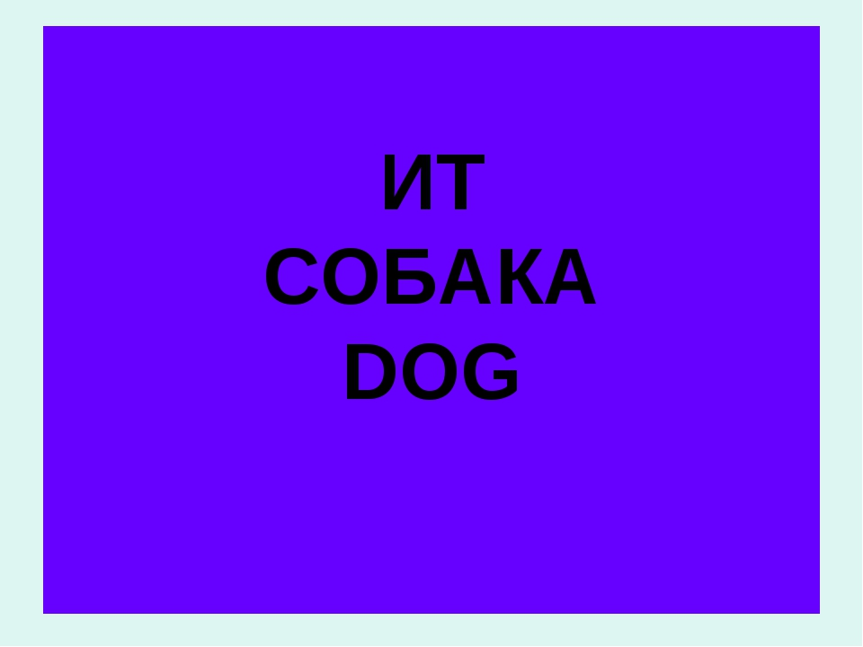 ИТ СОБАКА DOG