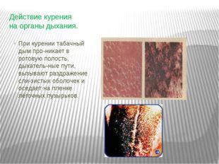 Действие курения на органы дыхания. При курении табачный дым про-никает в рот