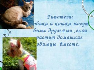Гипотеза: Собака и кошка могут быть друзьями ,если растут домашние любимцы вм