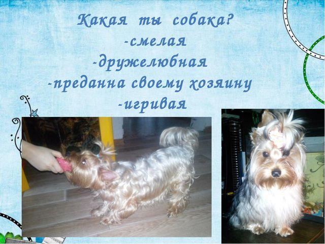 Какая ты собака? -смелая -дружелюбная -преданна своему хозяину -игривая