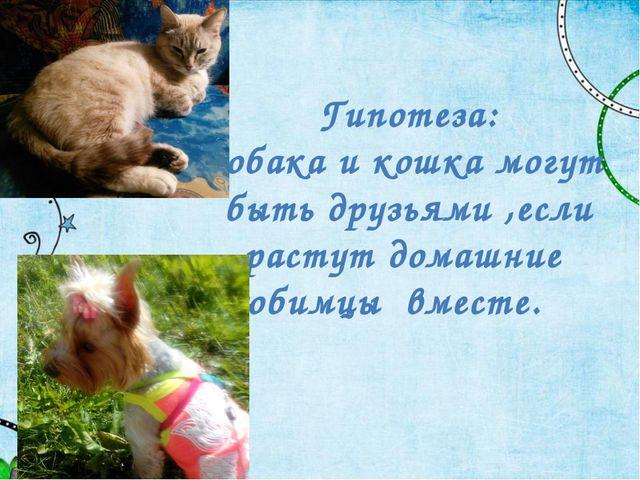 Гипотеза: Собака и кошка могут быть друзьями ,если растут домашние любимцы вм...