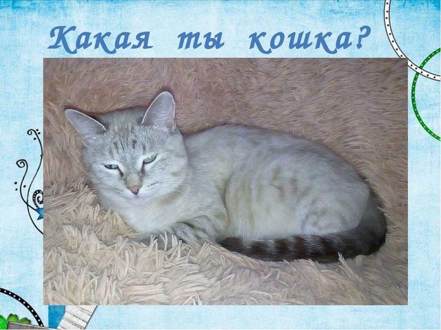 Какая ты кошка?