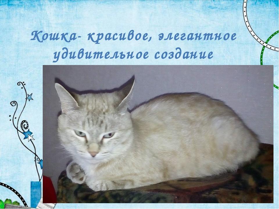 Кошка- красивое, элегантное удивительное создание