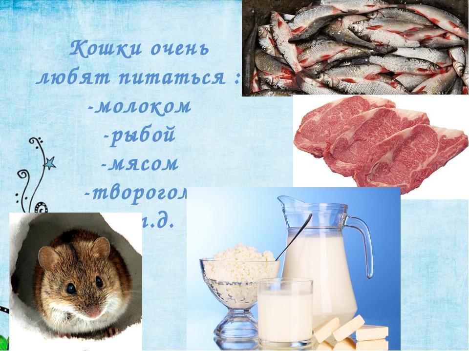 Кошки очень любят питаться : -молоком -рыбой -мясом -творогом -и т.д.
