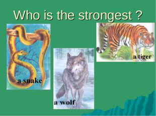 Who is the strongest ?
