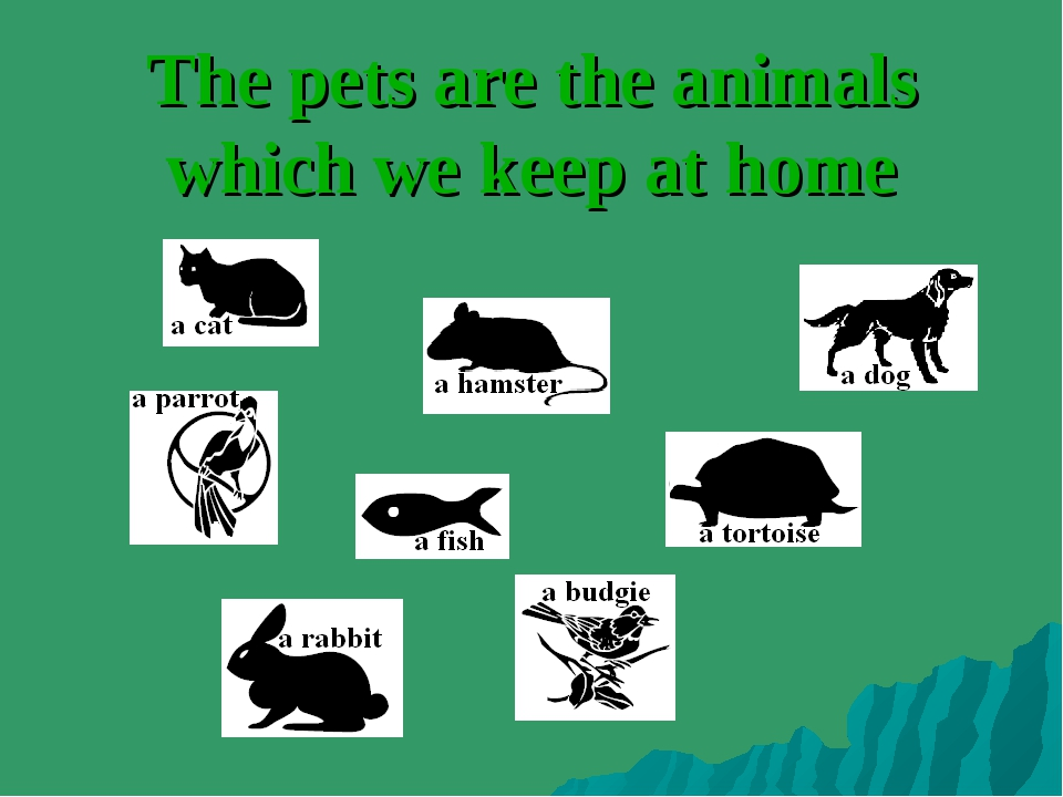 The pets are the animals which we keep at home