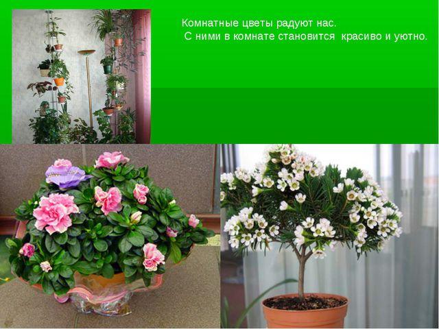 Комнатные цветы радуют нас. С ними в комнате становится красиво и уютно.