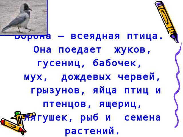 Ворона — всеядная птица. Она поедает жуков, гусениц, бабочек, мух, дождевых ч...