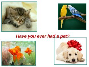Have you ever had a pet?