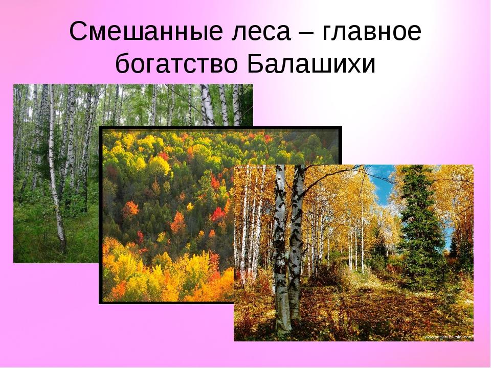 Смешанные леса – главное богатство Балашихи
