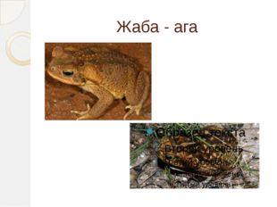 Жаба - ага