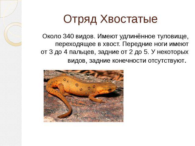 Отряд Хвостатые Около 340 видов. Имеют удлинённое туловище, переходящее в хво...