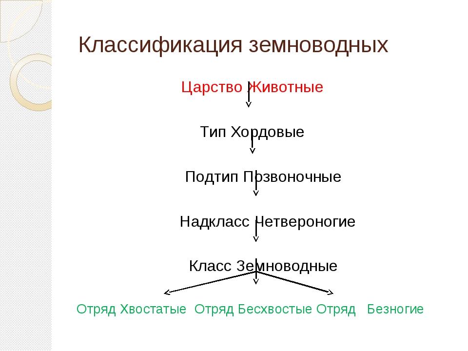 Классификация земноводных Царство Животные Тип Хордовые Подтип Позвоночные На...