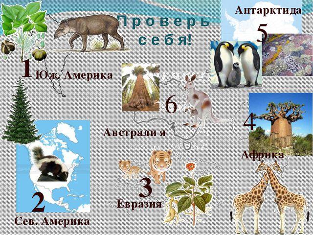 П р о в е р ь с е б я! 2 4 3 Евразия Африка 5 Антарктида 1 Юж. Америка Сев. А...
