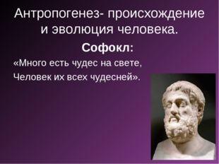 Антропогенез- происхождение и эволюция человека. Софокл: «Много есть чудес на