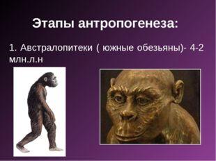 Этапы антропогенеза: 1. Австралопитеки ( южные обезьяны)- 4-2 млн.л.н