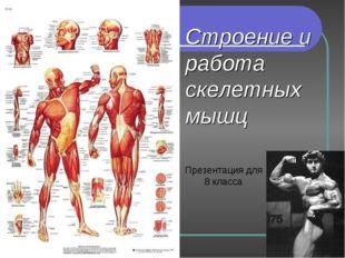 Строение и работа скелетных мышц Презентация для 8 класса