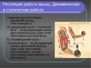Регуляция работы мышц. Динамическая и статическая работа Нервная дуга регуляц