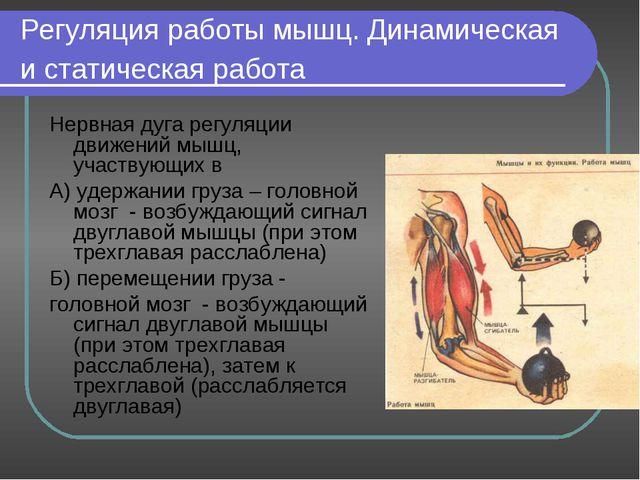 Регуляция работы мышц. Динамическая и статическая работа Нервная дуга регуляц...