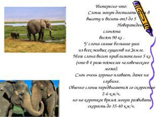 Интересно что: Слоны могут достигать 2,7м в высоту и весить от3 до 5 Новорожд