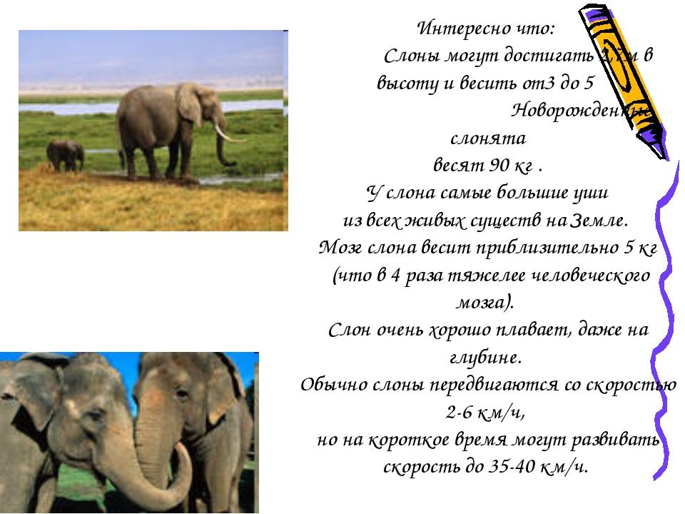 Интересно что: Слоны могут достигать 2,7м в высоту и весить от3 до 5 Новорожд...
