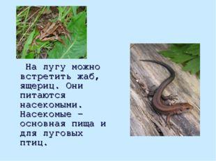 На лугу можно встретить жаб, ящериц. Они питаются насекомыми. Насекомые - ос