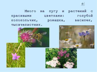 Много на лугу и растений с красивыми цветками: голубой колокольчик, ромашка,