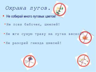 Охрана лугов. Не лови бабочек, шмелей! Не жги сухую траву на лугах весной! Не