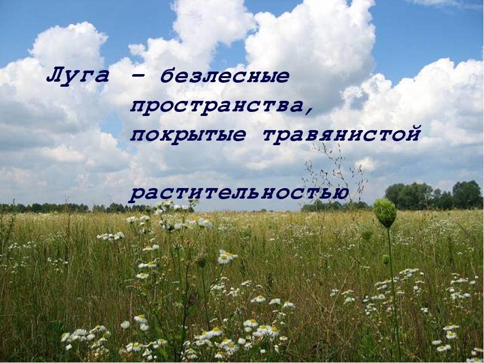Луга – безлесные пространства, покрытые травянистой растительностью